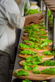 Preparing salad for catering food royalty free stock image