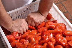 Preparing sauce. Royalty Free Stock Photography