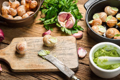 Preparing snails with garlic butter and herbs Royalty Free Stock Images