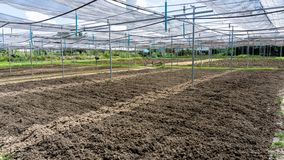 Free Preparing Soil For Plantation Of The Planting Nursery Under Shading Net In The Vegetables Orgarnic Farm Stock Photos - 164608383