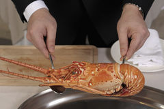 Preparing a spiny lobster Stock Photography