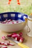 Preparing spring radish salad. Enjoying spring – preparing salad or pickles from fresh radish Stock Photos