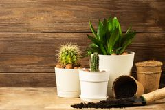 Preparing for spring to transplant plants. Pot, shovel, succulents cacti. Dark wooden rustic background. Copy space. stock photo