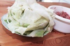 Preparing stuffed cabbage, Polish cuisine specialty. Stock Image