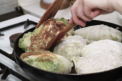 Preparing stuffed cabbage, Polish cuisine specialty. Royalty Free Stock Image