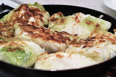 Preparing stuffed cabbage, Polish cuisine specialty. Royalty Free Stock Images