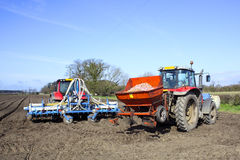 Preparing to plant potatoes Stock Photography