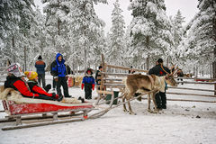 Preparing to the race on the reindeer sledges Stock Photo