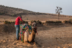 Preparing to ride a camel. A shot of a person doing preparation before riding a camel through the desert Royalty Free Stock Photo