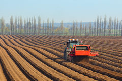 Preparing to sow carrots Royalty Free Stock Image