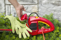 Preparing to to do Yard Work. Horizontal photo of male hand holding electrical power cutting shears over green hedges with stone wall in background Royalty Free Stock Images
