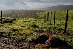 Preparing the Vineyard. Preparation of new vineyard, Elgin,Cape Town Stock Images