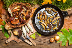Preparing wild mushrooms to frying Stock Images