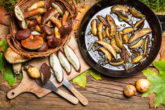Preparing wild mushrooms to frying Stock Photography