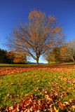 Preparing for the Winter. A lone tree in Autumn Royalty Free Stock Photo