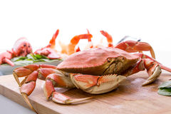 Prepearing Dungeness Crab and Red Lobster Stock Photos