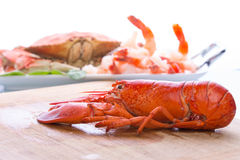 Prepearing Dungeness Crab and Red Lobster Stock Image