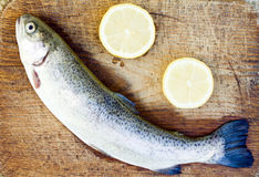 Prepering trout fish Stock Image