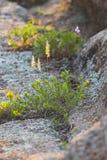 preria trawy Fotografia Stock