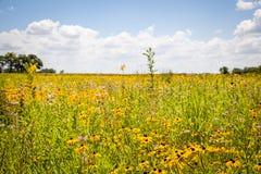 Preria w kwiacie Fotografia Royalty Free