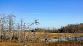 prerogativa erbosa dei terreni paludosi delle acque di inverno Fotografie Stock Libere da Diritti