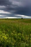 Preryjna łąka Obrazy Stock