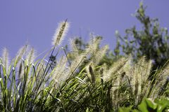 Preryjna trawa na gorącym słonecznym dniu Obraz Royalty Free