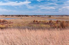 Preryjne trawy i bagna przy Necedah Fotografia Royalty Free