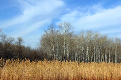 Preryjne trawy przy stroną droga Obraz Stock