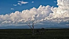 Preryjny burzy omijanie z szczupaka szczytem w tle zdjęcie wideo