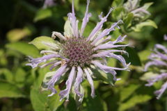 Preryjny kwiat Obrazy Royalty Free