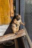 Preryjny pies w klatce w zoo fotografia stock