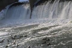Presa, cascada la corriente del río cae de la presa en el invierno presa helada con una corriente fuerte del río descensos brilla Foto de archivo libre de regalías