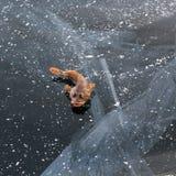 Presa del pesce su ghiaccio all'inverno Baikal Fotografia Stock Libera da Diritti