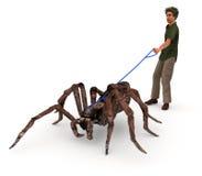 Presa del ragno per una passeggiata Fotografia Stock Libera da Diritti