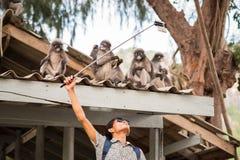 Presa del selfie con il bastone del selfie con le scimmie Immagini Stock