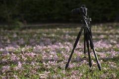 Presa della foto nel parco di Chatuchak fotografia stock