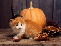 Presa-o-lanterna della zucca di Halloween e gattino dello zenzero su legno nero Immagini Stock