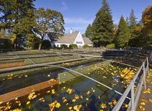 Presa Oregon de Bonneville del criadero de los pescados. imagenes de archivo