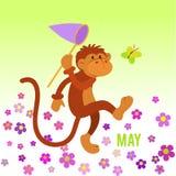 Presas divertidas del mono en mariposa Foto de archivo libre de regalías