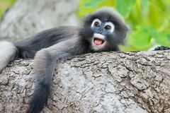 Monkey very lonely Royalty Free Stock Photography