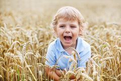 Preschool boy of 3 having fun in wheat field in summer Stock Photography
