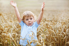 Preschool boy of 3 having fun in wheat field in summer Royalty Free Stock Image