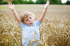Preschool boy of 3 having fun in wheat field in summer Stock Photo