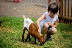 Preschool boy, petting little goat in the kids farm. Cute kind child feeding animals stock photo