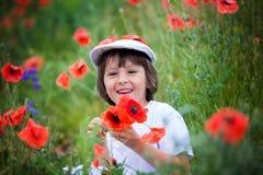 Preschool child in a poppy field, springtime Stock Photography