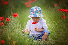 Preschool child in a poppy field, springtime Royalty Free Stock Photography