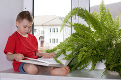 Preschooler boy reading a book Royalty Free Stock Image