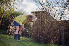 Preschooler girl helps to cut branches in spring sunny garden Stock Photos