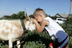 Preschooler and goat head butting. Preschooler and goat playing through head butting stock images